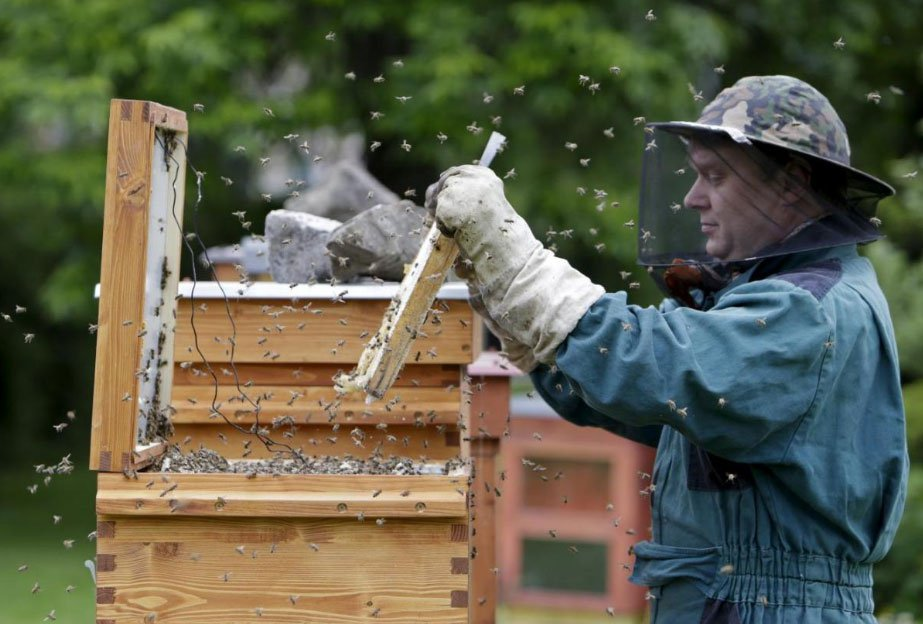 Reuters: Czech teacher battles bee-killing disease with hot hive